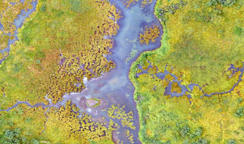Wetland and riparian permitting